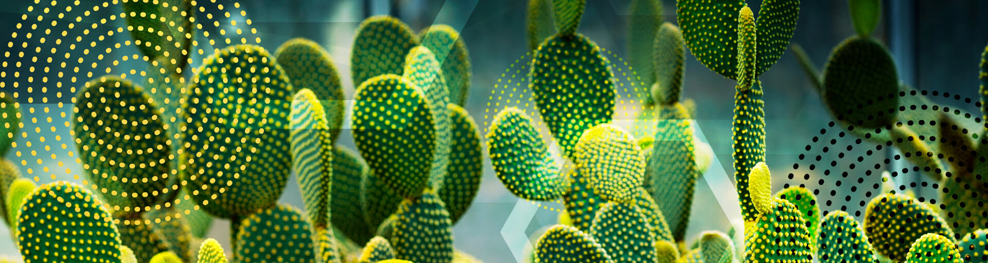 beaver tail cactus with abstract image overlay